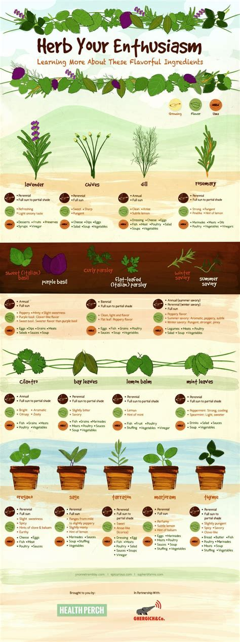 flavorful culinary herbs herbal academy   england