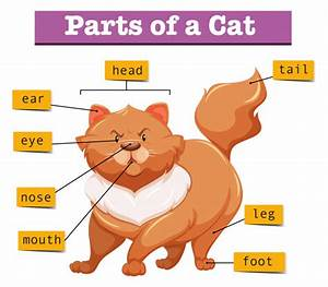 Diagram Showing Parts Of Cat Vector