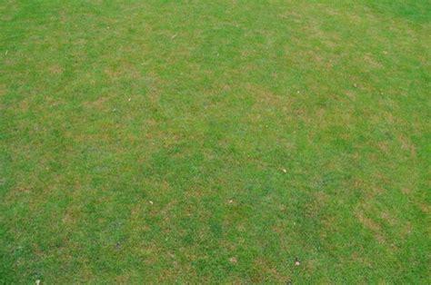 braune flecken im rasen gro 223 e abgestorbene flecken im rasen sommer rasenkrankheit hausbau