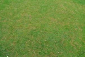 Braune Stellen Im Rasen : gro e abgestorbene flecken im rasen sommer ~ Lizthompson.info Haus und Dekorationen