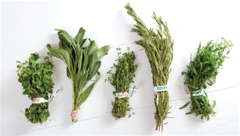 how to herbs fresh herbs are you going to scarborough fair nugget markets daily dish