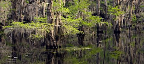 caddo lake state park texas parks wildlife department