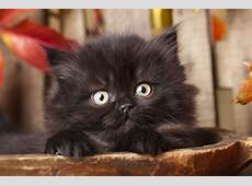 National Black Cat Day 2016 Why don't people adopt black