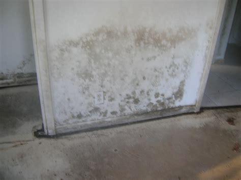 complete mold remediation miami general contractor