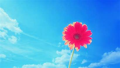 Desktop Wallpapers Summer Flowers Background Flower Nature