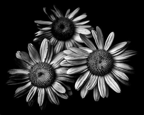 backyard flowers  black  white   series  black