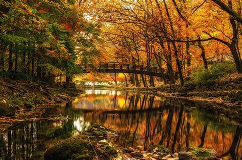 Nature Landscape Water Trees Forest River Bridge
