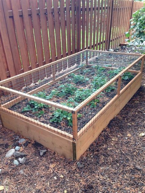 build  strawberry cage yard garden small