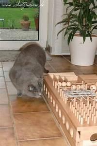 Kochen Für Katzen : best 20 selber bauen f r katzen ideas on pinterest ~ Lizthompson.info Haus und Dekorationen