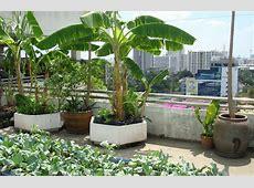 Start a Refreshing Rooftop Kitchen Garden