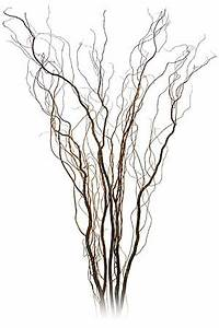 Vancouver CURLY WILLOW BRANCHES CENTERPIECES for Rental in
