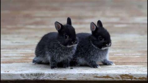 Coniglio In Gabbia - gabbia coniglio nano conigli nani gabbia coniglio nano