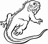 Lizard Coloring Pages Iguana Animals sketch template