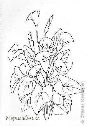 Calla lilies in 2020   Coloring pages, Flower drawing