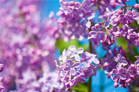 Duftpflanzen Für Die Wohnung by Duftpflanzen F 252 R Wohnung Balkon Und Garten Und