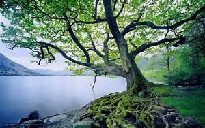 Baum Am Wasser : download hintergrund baum wasser moos gras freie ~ A.2002-acura-tl-radio.info Haus und Dekorationen