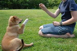 recommended trainers With dog behaviorist