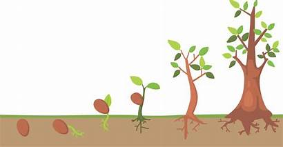 Cycle Tree Clipart Seed Illustration Vector