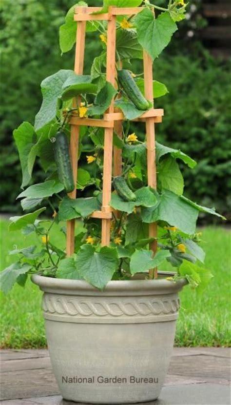 ideas  container gardening  pinterest