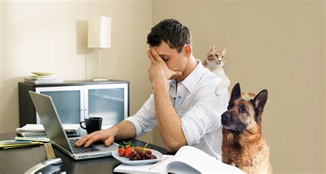 work from home working from home in an effective manner