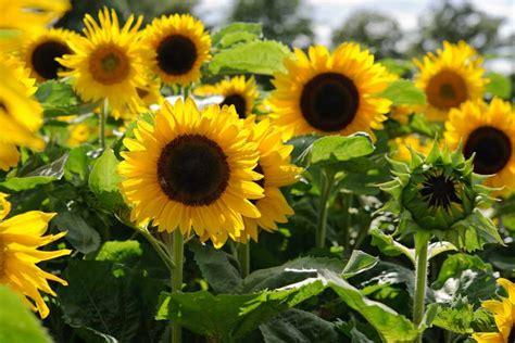 10 Flowers to Pick in August - BBC Gardeners' World Magazine