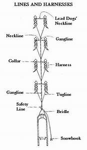 Lines and Harnesses for Dog Sledding, Alaska Iditarod ...