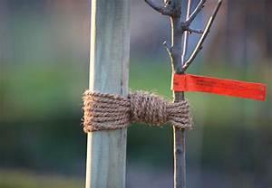Baum Pflanzen Anleitung : obstbaum pflanzen in 6 schritten obi anleitung ~ Frokenaadalensverden.com Haus und Dekorationen