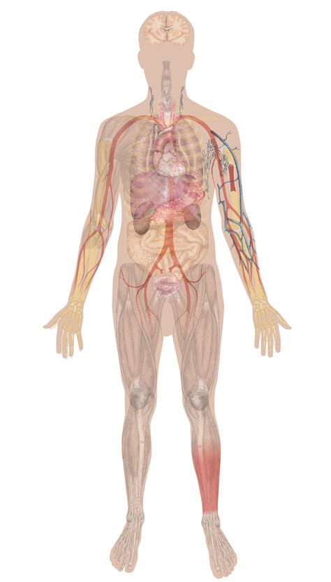 matters overview  body systems biology