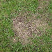 Wann Geht Rasensamen Auf by Rasen Vertikutieren Warum Wann Wie Oft Plantura