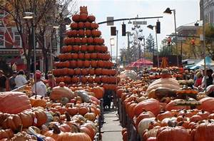 Pumpkin: The Curious History of An American Icon ...