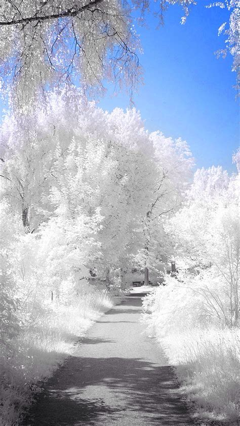 Free Winter Backgrounds by Pretty Winter Backgrounds 51 Images