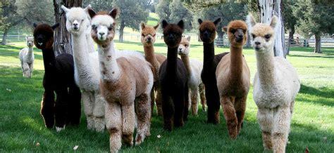 patients near veterinarian vet equine vets