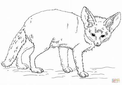 Fennec Fox Coloring Pages Realistic Drawing Kit