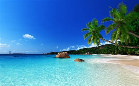 tropical paradise beach ocean sea palm summer coast