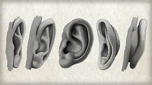 Photoshop Tutorials > Methods for Drawing the Human Ear ...