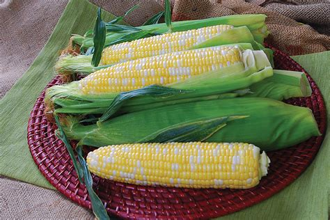 corn temptress sweet bi vegetables seeds