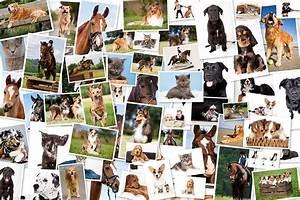 Viele Bilder Aufhängen : tierfotografie tierfotograf thore scheu tierfotografie ~ Lizthompson.info Haus und Dekorationen