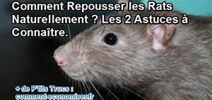 Comment Se Debarrasser Des Rats : comment se d barrasser de mulots taupier sur la france ~ Melissatoandfro.com Idées de Décoration