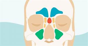 Sinus Definition Anatomy