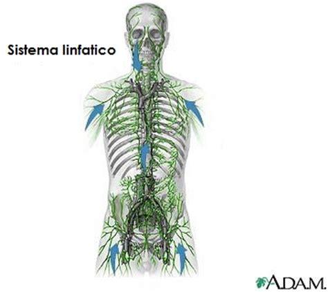 vasi linfatici gambe saltare fa bene alla salute osteopata it osteopata a