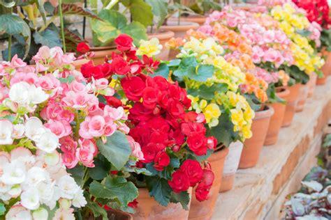 fiori begonie come arredare il balcone con i fiori non sprecare