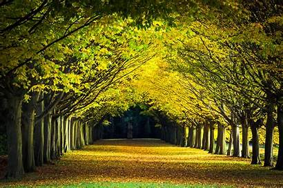 Landscape Cambridge Trees Avenue Pathway Between Tree