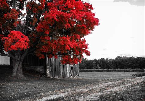 fileblack white  red jpg wikimedia