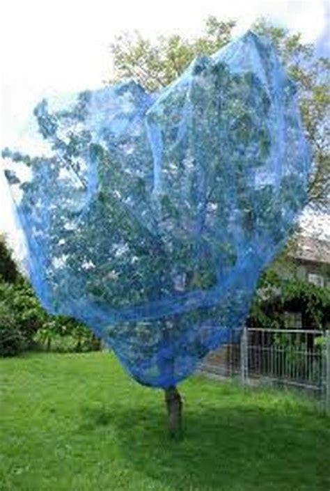 filet protection arbre fruitier filet anti oiseaux de couleur bleue id 233 al pour la protection des fruits du verger cerises