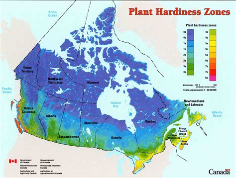 Comparing Us And Canadian Hardiness Zones  Laidback Gardener