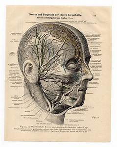 Medical Anatomical Illustration Print 1933 Skull Skeleton