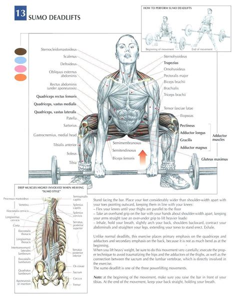Proper Form Bench Press by Muscle Group Of The Week Leg Workouts Ignoringlimits