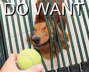 [Image - 4741]   Do Want / Do Not Want   Know Your Meme