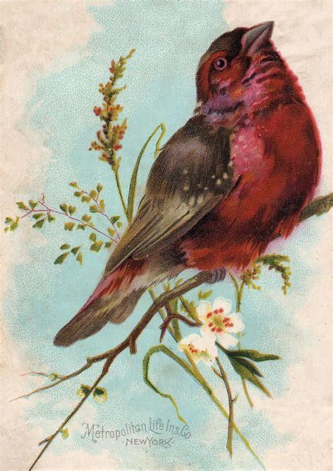 vintage clip art cute chunky bird  graphics fairy