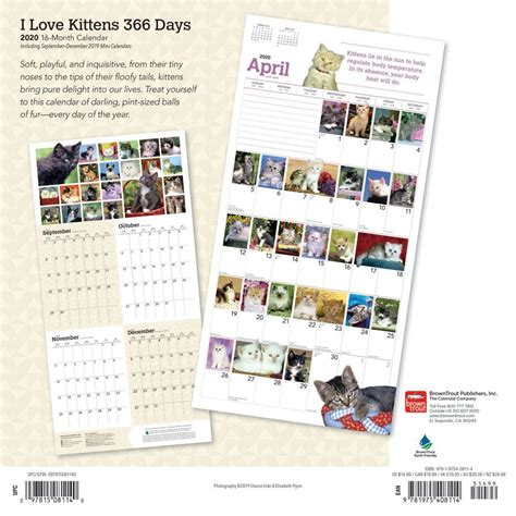 kittens days wall calendar